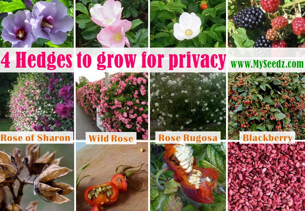 A colorful and fruity hedge for privacy!