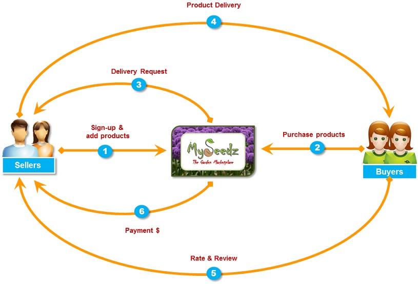 MySeedz Process